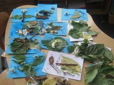 Acorns Henbury's Nature pictures