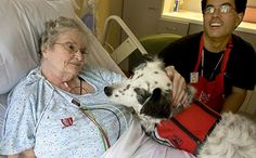 Should Pets Be Allowed In Hospitals?  If you love animals please visit www.whatcanwe.org and say yes to this!