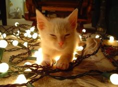 Christmas cute kitten - Google 検索