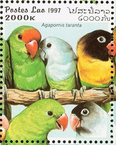 Black-winged Lovebird stamps - mainly images - gallery format