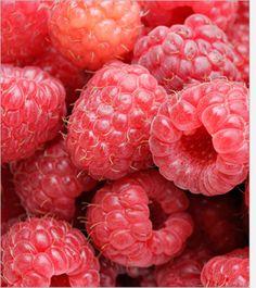 Red Raspberry Bush Seeds , Under The Sun Seeds Raspberry Bush, Raspberry Plants, Raspberry Syrup, Raspberry Recipes, Raspberry Ketones, Raspberry Food, Raspberry Seeds, Strawberry Nutrition, Raspberry Benefits