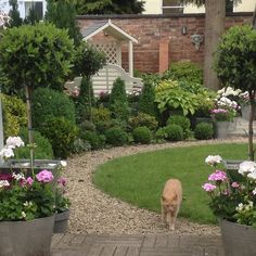View of the Garden from the steps, plus Skipper! Bliss, Gardens, Yard, Plants, Patio, Outdoor Gardens, Plant, Courtyards, Garden