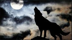 We love lone wolves. I would like to introduce my latest guest blogger, who would like to make a specific point about terrorism. I have demonstrated that the vast majority of domestic terrorism is committed by the right—yet it seems like I may have understated the case due to different definitions of what constitutes domestic terrorism. As I think about …