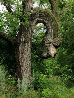 Oddly grown tree