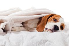 What Happens in a Dog's Body with Severe Vomiting?