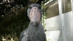 Unusual Animals, Rare Animals, Cute Baby Animals, Animals And Pets, Funny Animals, Weird Birds, Funny Birds, Beautiful Birds, Animals Beautiful