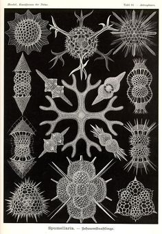 http://visualmelt.com/Ernst-Haeckel