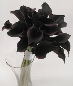 Black flowers to possibly use.  Calla Lillies