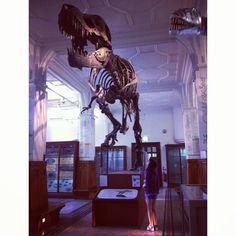 Stan the T. rex by @Annette Kuypers