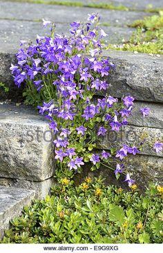 Essential Top - Purple Bellflowers by VIDA VIDA Cheap Sale Official Site Outlet Sneakernews JOMzEg