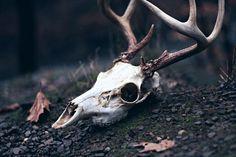 skull antlers | Tumblr #faerie