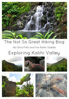Not So Great Hiking Blog: Na Ohia Falls to the Ko'olau Summit