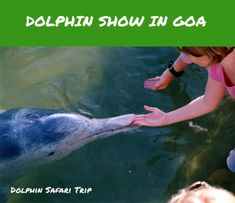 One of the cheapest boat activity in Goa is the Dolphin Show. Get your hands on to experiencing one of the most fun-filled, relaxing and pocket-friendly trip to witness the Indo-Pacific Humpback dolphins in the tranquil waters of the Arabian Sea. Behind The Sea, Dolphin Party, History Taking, Grand Island, Beach Shack, Island Tour, Best Resorts, Cruise Travel, Boat Tours
