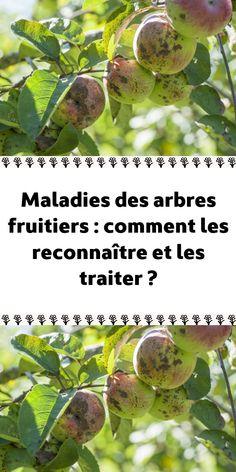 Permaculture, Horticulture, Actifry, Plantation, Bio, Gardening, Garden, Fruit Garden, Small Vegetable Gardens