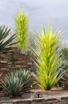 Dale Chihuly Desert Towers, 2008 Taken at the entrance to the Desert Botanical…