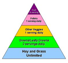 guinea pig food pyramid - Google Search