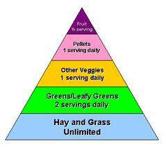 guinea pig food pyramid - Google Search