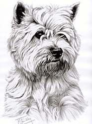 Cairn Terrier T-Shirt - Eye Catching Detail Wildside,http://www.amazon.com/dp/B005I5UZX4/ref=cm_sw_r_pi_dp_-hlQsb1X9DJSVB5K
