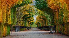 Schönbrunn Palace gardens in Vienna, Austria (© badahos/Shutterstock) – 2016-10-23 [http://www.bing.com/search?q=Sch%C3%B6nbrunn+Palace+Vienna&form=hpcapt&filters=HpDate:%2220161023_0700%22]