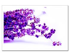Lavender Photography Lavender bouquet twigs by stoevvalentin, $24.00