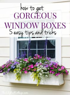 Plants For Window Boxes 25