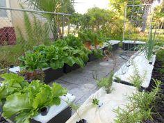 Earthbox (R) container garden