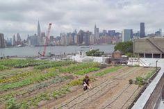 Eagle Street Rooftop Farm in Brooklyn