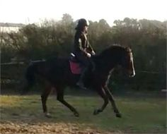 15.2hh attractive thorougbred mare for sale - 15.2hh attractive thorougbred mare for sale http://www.equineclassifieds.co.uk/Horse/152hh-attractive-thorougbred-mare-for-sale-listing-763.aspx#.U4CXKHYTCZY