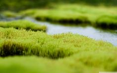moss images background - moss category