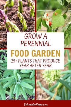 There are many edible perennials for the food garden. Learn how to grow perennial vegetables, fruits, and herbs to feed your family year after year. There are perennial edible plants that will grow in almost every gardening zone! Perennial Vegetables, Planting Vegetables, Growing Vegetables, Vegetable Gardening, Growing Plants, Perennial Plant, Edible Plants, Edible Garden, Indoor Gardening Supplies