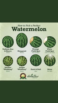Watermelon picking tips : coolguides Picking Watermelon, Watermelon Facts, Fruit Picking, Watermelon Ripeness, Cooking Tips, Cooking Recipes, Food Tips, Good Food, Yummy Food