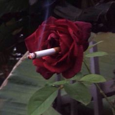 @hipppietrash is this Lana del Rey?
