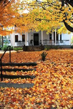 Maple leaf carpet to Maple Grove House, Washington St. Hendersonville, NC. October 28, 2010