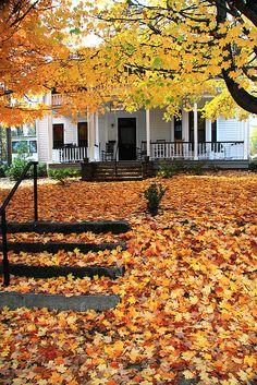 Maple leaf carpet to Maple Grove House, Washington St. Hendersonville, NC. October 28, 2010