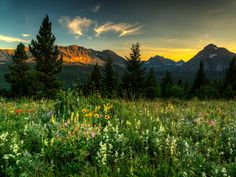 Wildflowers at Glacier National Park, Montana by Beau Rogers on 500px