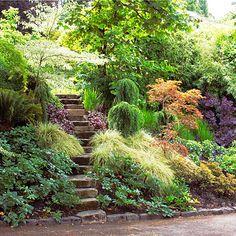 Low maintenance hillside plants landscaping a slope for Spring hill nursery garden designs