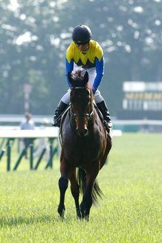 第83回 GI 日本ダービー(16.05.29)|フォトギャラリー|競馬|他競技|スポーツナビ