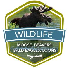 Wildlife on the Katahdin Woods & Waters Scenic Byway