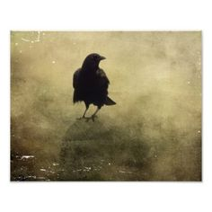 #vintage - #Mysterious Fog Surrounds The Black Crow Photo Print