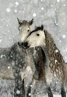 Gray Dapple Horses in Heavy Snowfall - I fly on my best Friends wings. http://www.annabelchaffer.com/categories/Equestrian-Gifts/