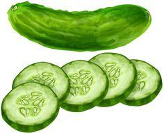 Cucumber - Pepino