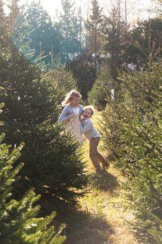 Christmas Tree Farm photos. Christmas Tree Farm Mini Session. Christmas Family photos.
