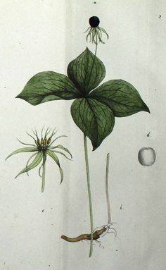Hegetschweiler,J. | Belladonna, Die Giftpflanzen der Schweiz.1828
