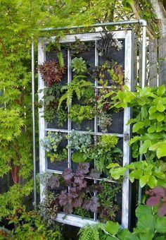 Old Window For Vertical Vegetable Garden by francescagino #Vertical_Garden #Window_Frame