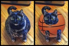 My cat walked in and I just noticed he looks like a basketball with legs.