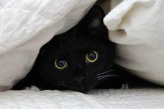 Black Cat...does he look familiar @audrey moss?