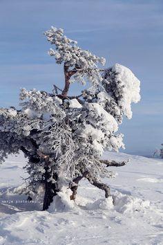 Levi, Finnish Lapland Bucket List Destinations, Cross Country Skiing, Winter Beauty, Winter Time, Trekking, Winter Wonderland, Woods, Beautiful Pictures, Snow