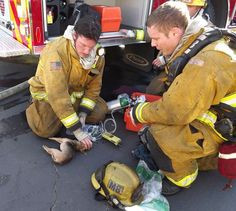 firefighters saved a tiny dog with ventilation. #animals #firefighters #hero