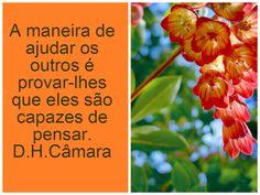 Mensagens-blog Entre Arte, Poesias e Cartões Flores e Belezas da natureza: D.H. Câmara.N29
