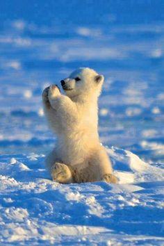 "lolcuteanimals: ""Polar Bear Pattycake cute baby polar bear on We Heart It. """